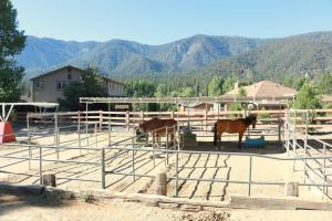 Horse Boarding in Pine Mountain Club